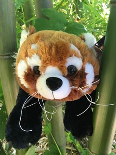 91c55fce0c9b Help save red pandas in the wild! Donations of $100 or more are eligible to