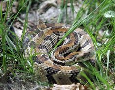 Teenagers who killed, grilled and ate a #rattlesnake are fined in court: