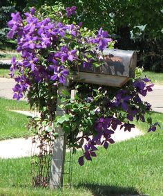 Clematis Mailbox dad had our mailbox just like this one. Clematis Mailbox dad had our mailbox just l Landscaping With Roses, Mailbox Landscaping, Garden Landscaping, Old Mailbox, Mailbox Garden, Mailbox Ideas, Garden Gate, Mailbox Makeover, Painted Mailboxes