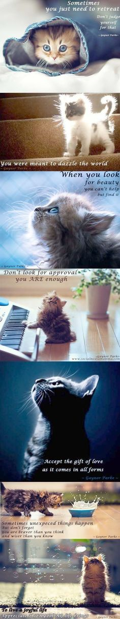 Cute n wuverly cutenwuverly on pinterest kittens throwing up kittens game blueprint malvernweather Choice Image