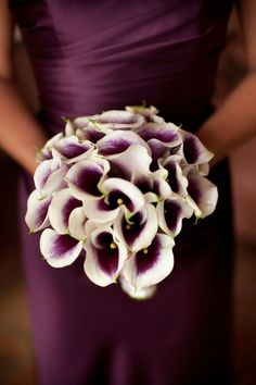 Julie Adama posted Wedding Bouquet - Simply Black and White. Deep purple almost black calla lilies complement the cymbidium orchids perfectly in this wonderful exotic bouquet. Lys Calla, Calla Lily, Purple Calla Lilies, Bouquet Bride, Wedding Bouquets, Lily Bouquet, Bridesmaid Flowers, Dark Purple Bridesmaid Dresses, Wedding Bridesmaids