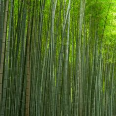 in Roughly 20 minutes in 7 seconds of bamboo.