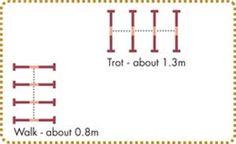 Image result for ingrid klimke cavaletti exercises