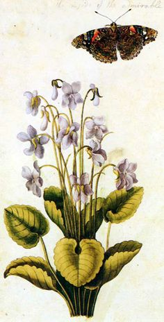 Violas ~ painted by Jacques le Moyne des Morgues (c. 1533–1588).