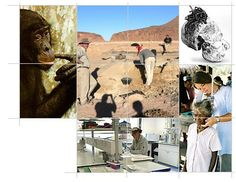 Biological Anthropology at the University of Cambridge
