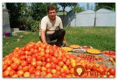 Skúsený záhradník prezradil recept, ktorý používa každý rok a ktorý pôsobí ako simulant a výžiava pre rast paradajok. Vegetable Garden, Natural, Gardening Tips, Garden Landscaping, Garden Design, Health Fitness, Pumpkin, Landscape, Vegetables