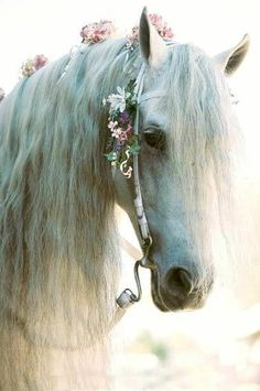 using this idea to decorate the horse in the upcoming shoot