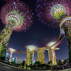 Supertree Garden, Singapore