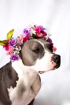 Pitbull in flower crown = LOVE Love My Dog, Cute Dogs, Cute Puppies, Animals And Pets, Cute Animals, Pit Bull Love, Dog Wedding, Beautiful Dogs, Animals Beautiful