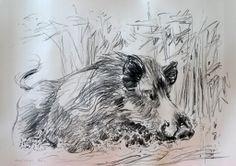 Wild Boar, W. Weber