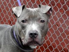 NOW ON DEATH ROW TO DIE MARCH 5th. UNCLE REX: ID# AO958024. AT MANHATTAN ACC. SHARE, PLEDGE ON FB, FOSTER, ADOPT! PLEASE HELP!