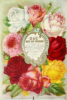Wings of Whimsy: 1891 Dingee Conard Seed Catalog Cover