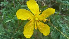 Blooming in Mpumalanga
