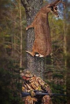 funny but I feel bad for the deer.