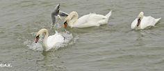 Donauinsel Pets, Photography, Animals, Island, Photograph, Animales, Animaux, Fotografie, Photoshoot