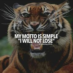 Have the mind set of being a winner. Every man is entitled to decide their own success. What you wish works for you, cho. Inspirational Quotes About Success, Motivational Quotes For Students, Success Quotes, Inspiring Quotes, Tiger Quotes, Lion Quotes, Self Quotes, Woman Quotes, Care Quotes