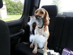 ABC22 Dayton's Dog of the Day - Scotchie