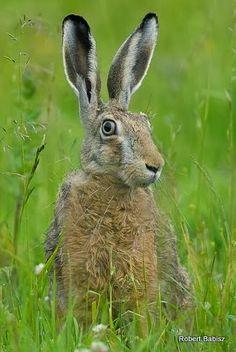 Felt Animals, Cute Animals, British Wildlife, Funny Bunnies, Spring Fever, Cute Photos, Bird Feathers, Wildlife Photography, Beautiful Creatures
