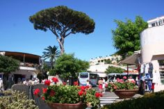 Anacapri es una comuna italiana de alrededor de 6000 habitantes en 54,08 km² de la provincia de Nápoles. Está situada en la isla de Capri.