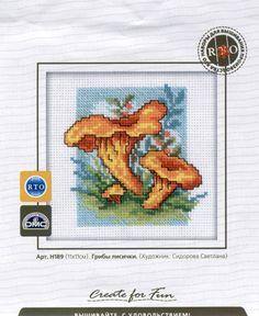 funghi-3-1