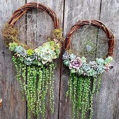pretty neat Gentle dream catchers of succulents. pretty neat Gentle dream catchers of succulents.Gentle dream catchers of succulents.pretty neat Gentle dream catchers of succulents.Gentle dream catchers of succulents. Succulent Gardening, Cacti And Succulents, Planting Succulents, Container Gardening, Organic Gardening, Succulent Outdoor, Propagate Succulents, Vertical Succulent Gardens, Flower Gardening