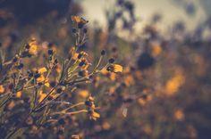 Wild Fall Flowers by 1darkstar1.deviantart.com on @DeviantArt