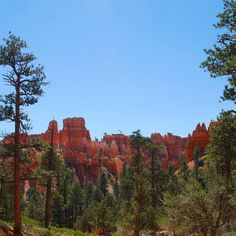 Bryce Canyon National Park with the Denver Museum. #rei1440project #utah #hiking #dmnsorg #explore #ilovenature #getoutside #brycecanyon #canyons #backpacking #meetthemoment #solitude #5280 #outsidemagazine #explorenature #adventureisoutthere #nationalpark by clinton461