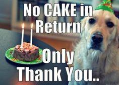 Thank you Birthday Meme dog