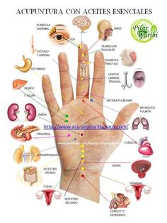 Massage Quotes Deutsch - Massage Therapist Business Cards - Massage Oil Set - - Thai Massage Tips - Massage Benefits To Get Acupuncture Points, Acupressure Points, Health And Fitness Articles, Health And Wellness, Herbal Remedies, Health Remedies, Natural Remedies, Reflexology Massage, Foot Massage