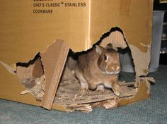 "Learn how to build a cardboard castle for your pet rabbit. Your bunny will spend hours on ""renovation"" chewing new doorways and taking down walls. House Rabbit, Pet Rabbit, Rabbit Behavior, Dwarf Rabbit, Bunny Cages, Cardboard Castle, Cardboard Boxes, Bunny Toys, Bunnies"