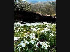 ▶ Snowdrop Gardens by Great British Gardens - The ...