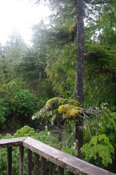 Pacific West Coast Rainforest - Pacific Rim National Park - Vancouver Island, British Columbia, Canada