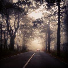 https://flic.kr/p/pjECSd | Sin título | Nebbia montagna alberi inverno freddo