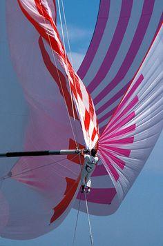 Sails, Pink, Carmen, Maxi yacht, Ph. Franco Pace