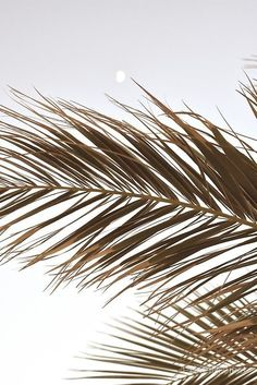 Palm Tree Leaves in BeigeYou can find Palm trees and more on our website.Palm Tree Leaves in Beige Aesthetic Header, Cream Aesthetic, Brown Aesthetic, Beach Aesthetic, Aesthetic Collage, Summer Aesthetic, Aesthetic Backgrounds, Aesthetic Iphone Wallpaper, Aesthetic Photo