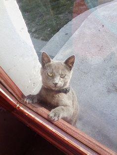Open the door..now!