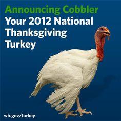 via The White House.... do pardoned turkeys every get eaten eventually?