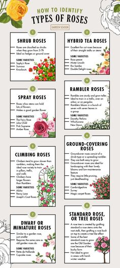 Roses Garden, Planting Roses, Garden Plants, Garden Gates And Fencing, Fences, Black Love Quotes, Cheap Landscaping Ideas, Rose Varieties, Types Of Roses