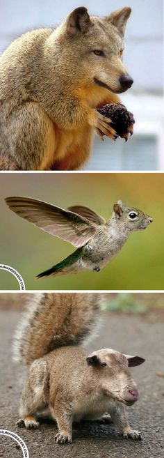 Morphing animal photo manipulations | Squirrels, kind of.