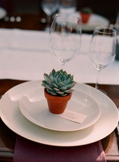 succulent as dinner party favor