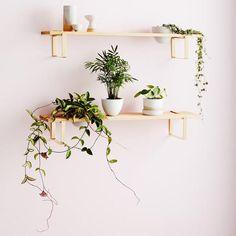 IVY MUSE PLANT SHELF