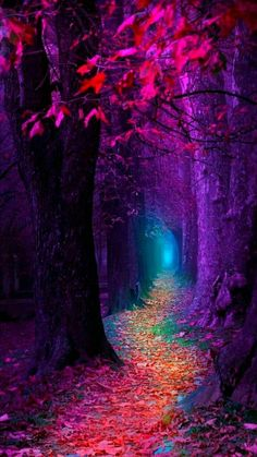 Enchanted forest – Miracles from Nature Jolie Photo, Fantasy Landscape, Dark Landscape, Forest Landscape, Landscape Photos, Pretty Pictures, Amazing Photos, Beautiful Landscapes, Wallpaper Backgrounds