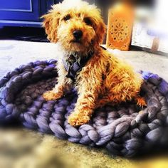 Cora's Chunky Dog Bed by Wool Couture Giant Knitting, Arm Knitting, Chunky Crochet, Diy Crochet, Dyi Dog Bed, Yarn Needle, Diy Kits, Merino Wool, Arts And Crafts