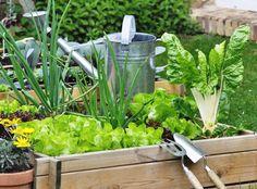 Qual é o melhor momento do ano para plantar legumes e vegetais