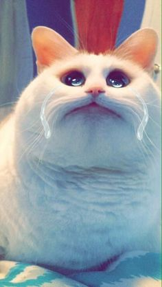 This sad sack: | 22 Animals That Look Way Better With The New Snapchat Filters