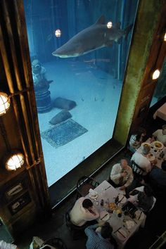 aquarium fun to go to dinner there funny that people aren't staring at the shark I sure would