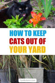 Discover 22 ways to keep cats out of your yard using plants and natural remedies. Find out how to get rid of cats using these methods for keeping yards and gardens from becoming a personal litter box. These DIY solutions will keep cats out of backyards. Cat Repellant Outdoor, Organic Gardening, Gardening Tips, Keep Cats Away, Pergola Pictures, Weed Control, Diy Garden Decor, Garden Ideas, Garden Pests