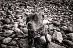 Just a quick test using a Sony Black and white shots: camera vs Adobe Lightroom vs Nik Silver Efex Pro Vancouver Photography, White Camera, Image Processing, One Image, Lightroom, Dogs And Puppies, Sony, Black And White, Animals