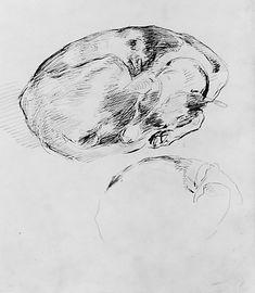 John Singer Sargent  (American, 1856–1925) | Dog | The Metropolitan Museum of Art, New York | Gift of Mrs. Francis Ormond, 1950 | 50.130.142a
