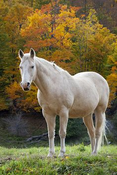 ☀White Horse In Autumn by Brian Jannsen